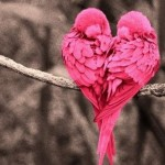 loveheartbirds